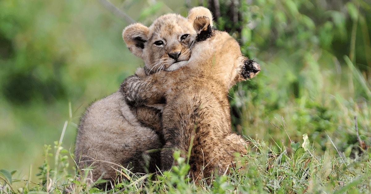 dlaczego warto sie przytulac