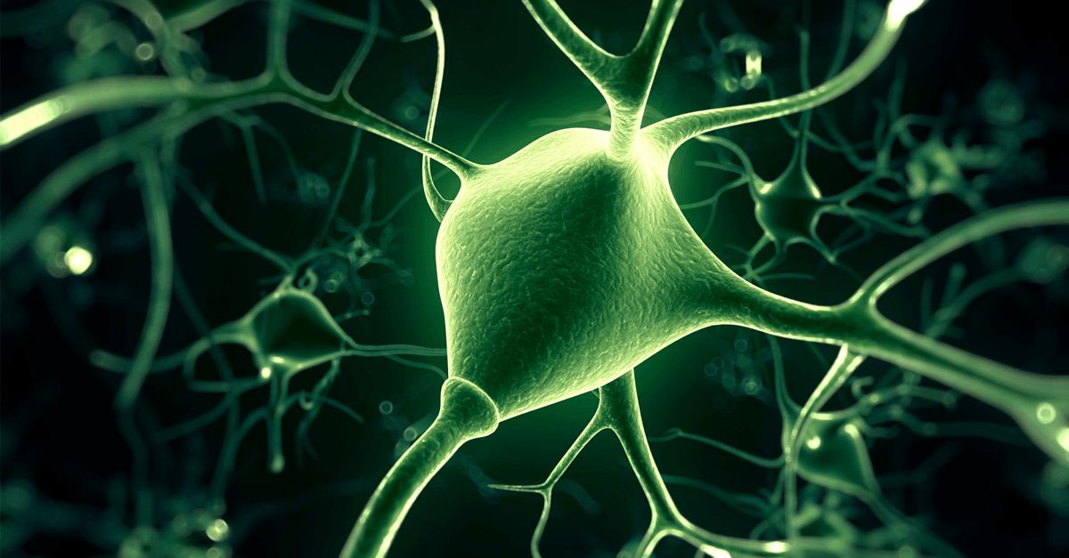 mity na temat mozgu