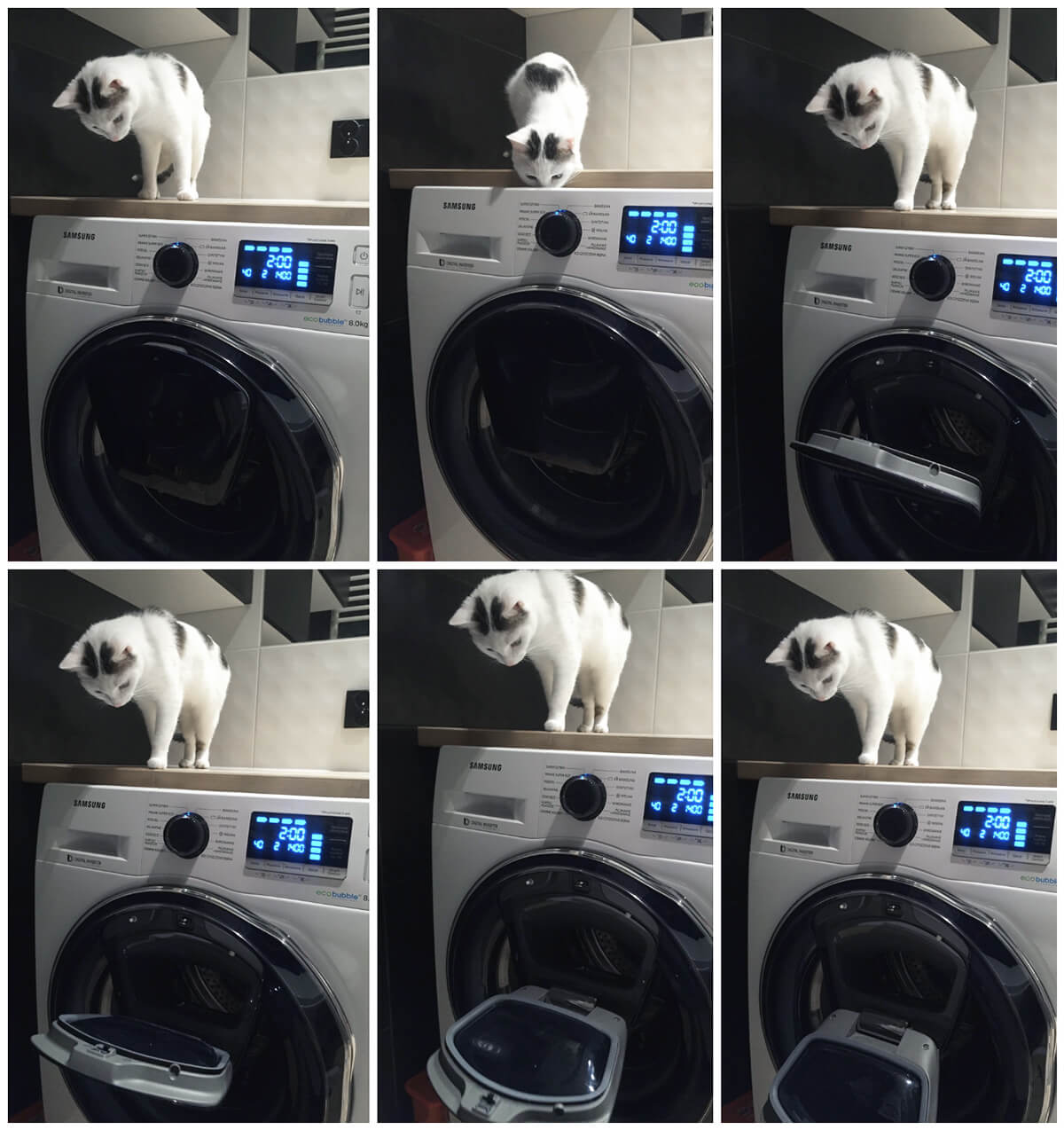 Kot testuje pralkę Samsung Addwash