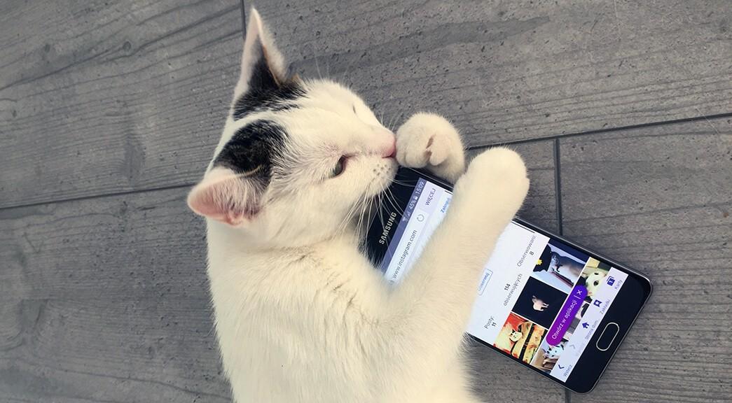 Kotek trzyma telefon Samsung Galaxy A5
