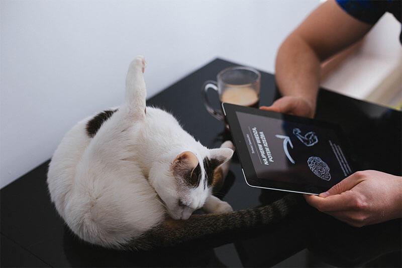 Kot ćwiczy jogę