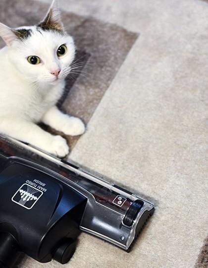 Tefal Turbo Brush (szczotka od odkurzania sierści) i kot